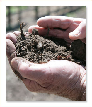 Bill Tristant hand and soil image